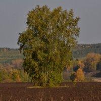 Во поле береза стояла. :: petyxov петухов