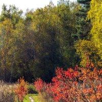 Теплая осень :: Vladimir Lazarev