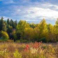 Теплая осень :: Владимир Лазарев