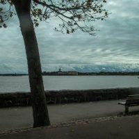 Финский залив :: Елена Митряйкина