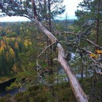 Финский пейзаж :: Марина Домосилецкая