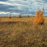 Осенняя степь :: Александр Никишков