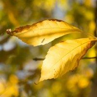 солнечная осень :: Надежда Щупленкова