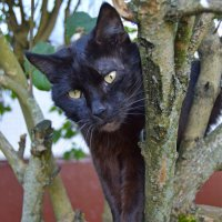 Жил да был черный кот... :: Vladimir Semenchukov