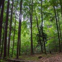 Лето в лесу :: Alex Molodetsky