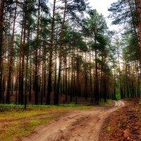 Утро в лесу :: Владимир Брагилевский