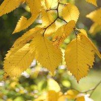 Осенние листья шумят и шумят в саду.... :: Tatiana Markova