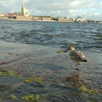 ..и вылетит птичка.. :: tipchik
