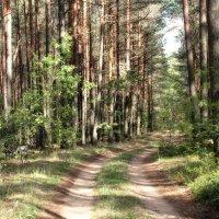 Летний полдень в лесу. :: Инна Малявина