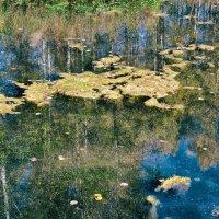 Просто тина в озере понравилась :: Дмитрий Конев