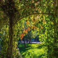 Осень пришла в парки Москвы. :: Владимир Безбородов