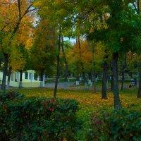 Вечерний парк осенью :: Albina