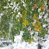 Первый снегопад :: galina tihonova