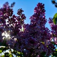 Солнце забрало весну и лето :: Света Кондрашова