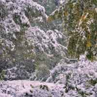 Снегопад октября :: galina tihonova