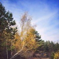 Осень :: Paul B.