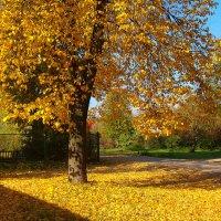 На ковре из желтых листьев :: Grey Bishop