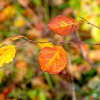 Осенние краски. :: Владимир Лазарев