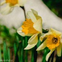 цветы :: Катерина