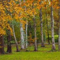 В осеннем парке 4 :: Виталий