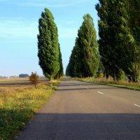 дорога домой... :: Назар