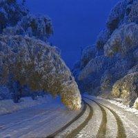 Сказки зимнего леса :: юрий Амосов