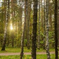 Закат в лесу :: Sergey Lebedev
