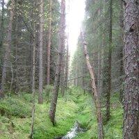 Лесной ручеек :: Марина Домосилецкая