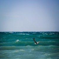 Над седой равниной моря... :: Евгения Кирильченко