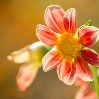 Подскажите название цветка? :: Alex Bush