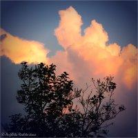 Пылающее облако :: Anjelika Reshetnikova