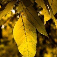 Осень пришла... :: Виталий Павлов
