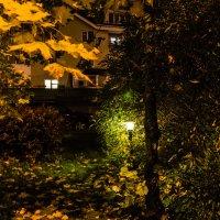 Осень пришла в сады и парки Москвы. :: Владимир Безбородов