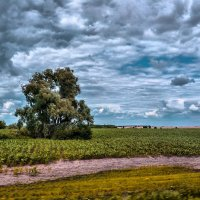 Скорость ветра :: Ирина Falcone