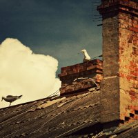 Чайки на крыше :: Ольга Мальцева