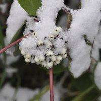 Снежено заснежено :: Tatyana Kuchina