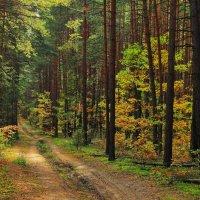 В таинственных и солнечных нахмурах... :: Лесо-Вед (Баранов)