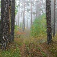 Утро в лесу :: IURII