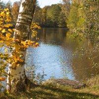 Октябрь уж наступил :: Виталий