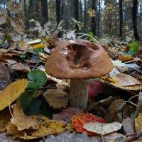 Один в лесу :: Валерий Чепкасов