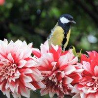 Красота и птичка. :: Hаталья Беклова