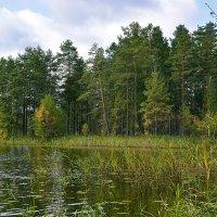 Осень начало :: Владимир Филимонов