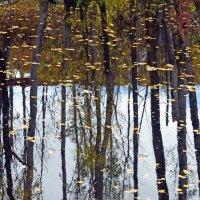 На глади воды - листва и стволы (почти скороговорка) :: Полина Потапова