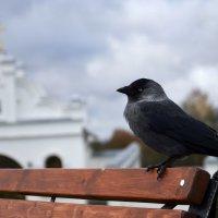 птичка на территории монастыря :: Михаил Радин
