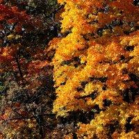 Еще осень, яркая... :: Валерия  Полещикова