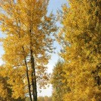 На грани листопада :: sergej-smv