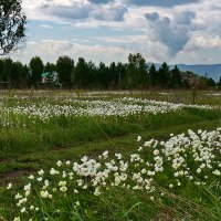 Когда ветреница в лугах цветет :: Екатерина Торганская