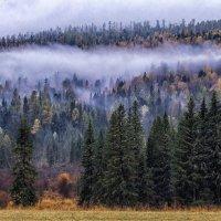 сентябрьские туманы :: Галина Шепелева