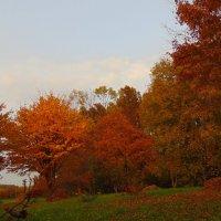 В позолоте лес в октябре. :: Людмила Ларина