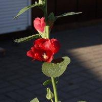 Цветы запоздалые :: София